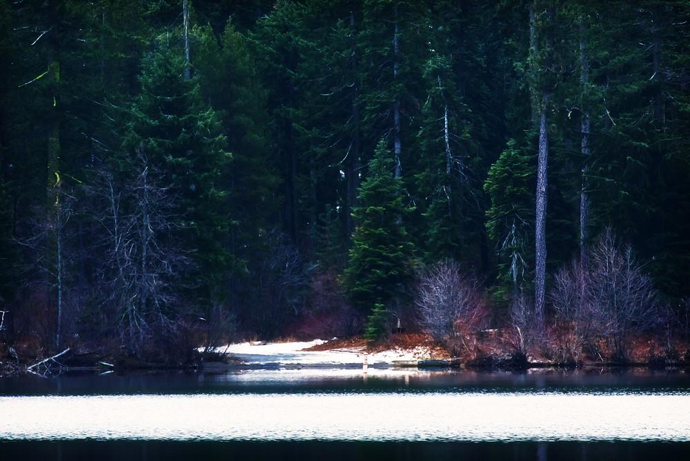 Seasons Winter Forest