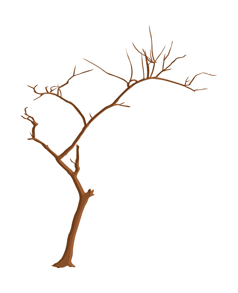 Shape Of Dead Tree