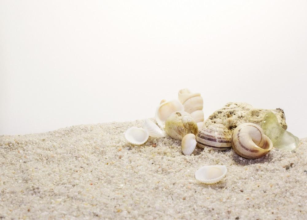 Shells 21