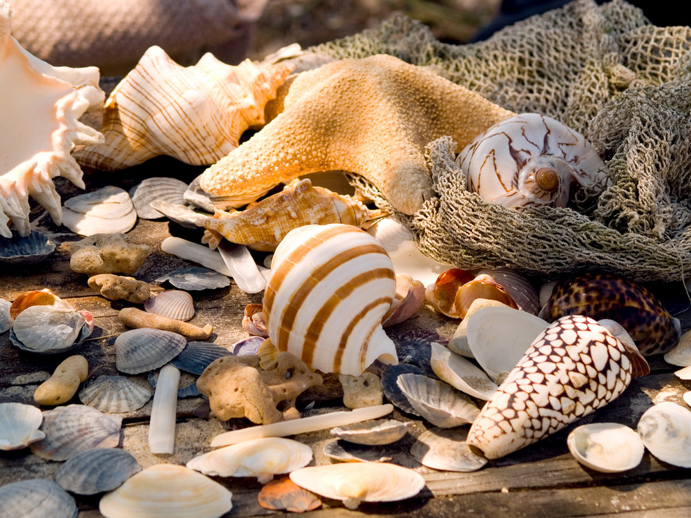 Shells. Marine Romantic Still Life