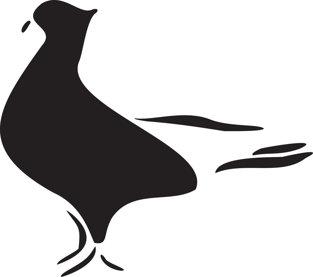 Silhouette Of A Pigeon.