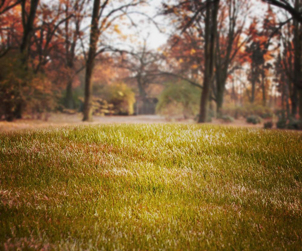 Simple Grass Backdrop