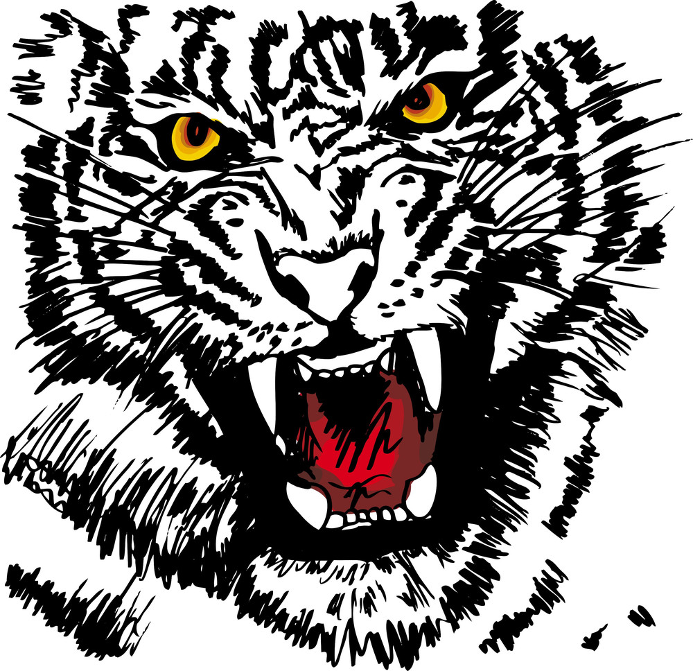 Sketch Of White Tiger. Vector Illustration