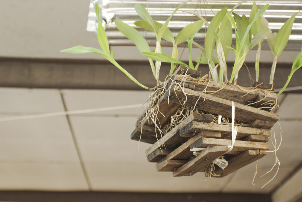 small beautiful green tree in pot, wooden sticks, branch with leaf