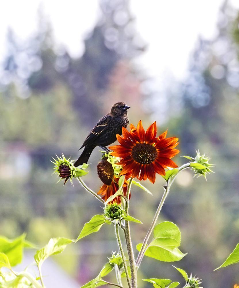 Small Bird On Flower 213