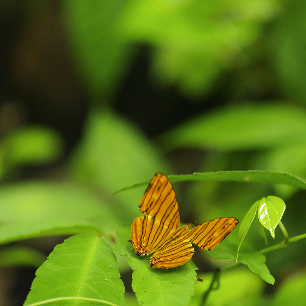 Small orange butterfly on fresh green leaf background