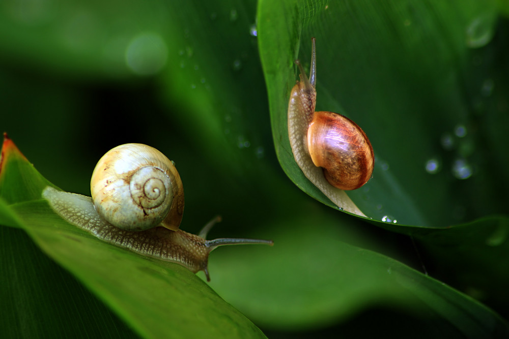 Snails In Natural Environment