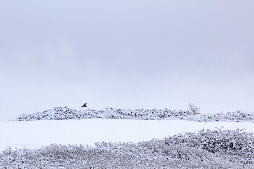 Snow Land Scene