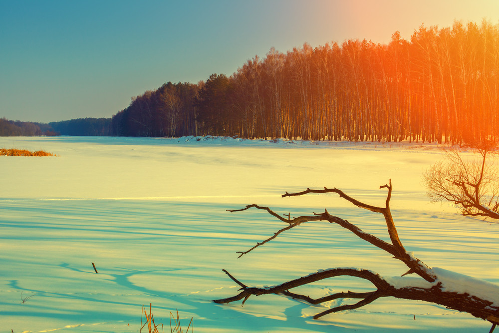 Snowy field at sunset with fallen dry tree