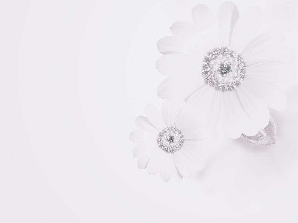 Soft Subtle Flower Background