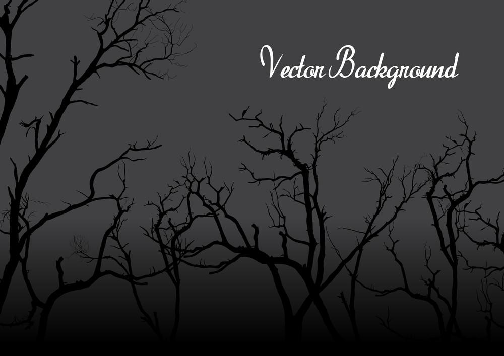 Spooky Dead Trees