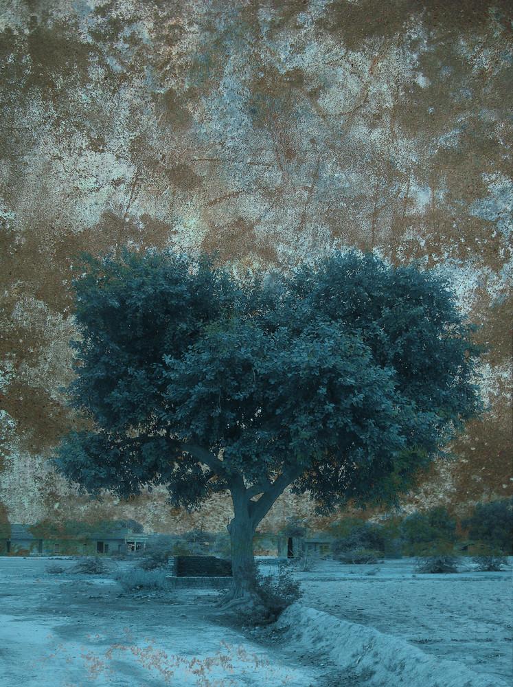 Spooky Tree Background