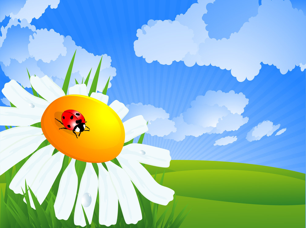 Spring Landscape. Daisy, Grass And Sky. Vector.