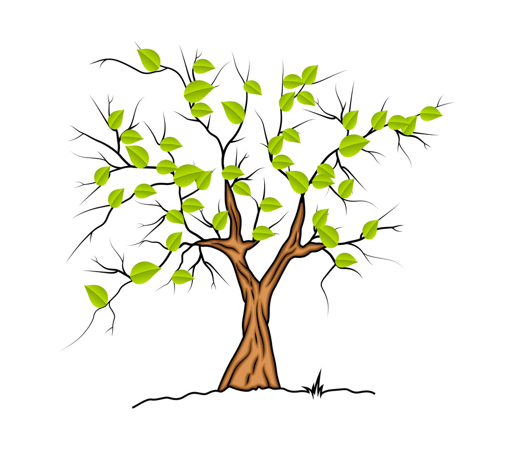Spring Nature Tree