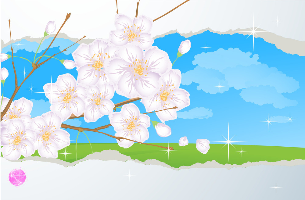 Spring Vector Abstract With Cherry Blossom.