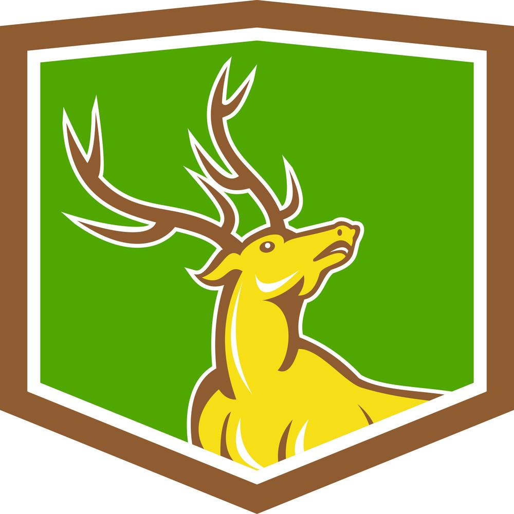 Stag Deer Looking Up Shield Cartoon