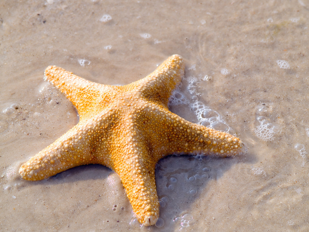 Starfish At The Exotic Beach