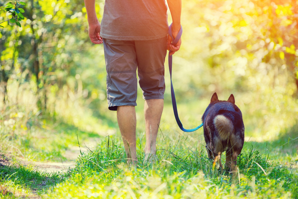 A man walks with a dog on a rural road