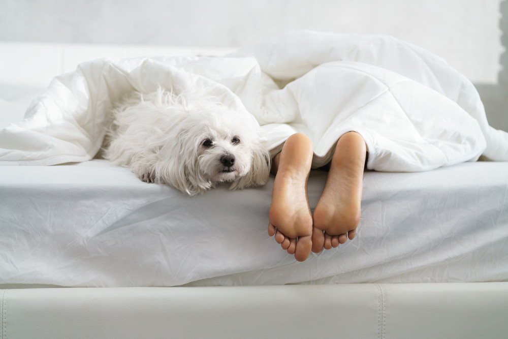 Black girl in bed in the morning with white dog. Tired young African American woman sleeping at home with her pet in messy bedroom, showing feet.