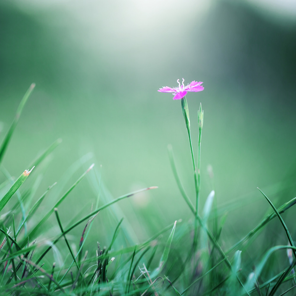 bright picture of many pink wild flowers in field in morning. Colorful nature background