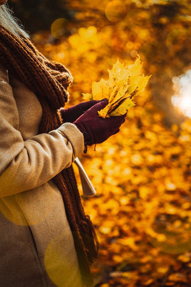 Close up of women hands holding bouquet of yellow autumn maple leaves in her gloved hands. Ground covered with golden leaves lightend by warm evening light beams