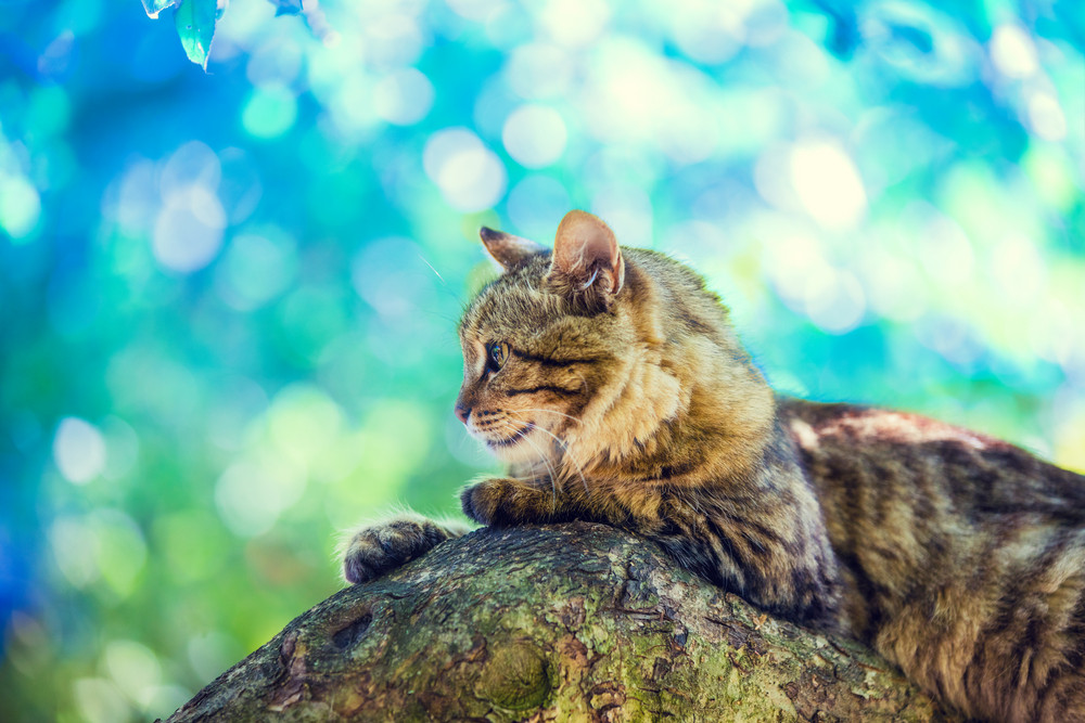 Cute cat lies on the tree in the garden