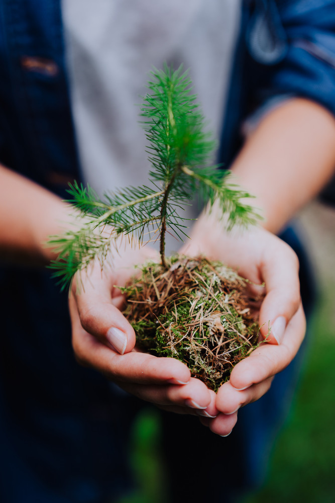 Female hand holding sprout wilde pine tree in front in nature green forest. Earth Day save environment concept. Growing seedling forester planting