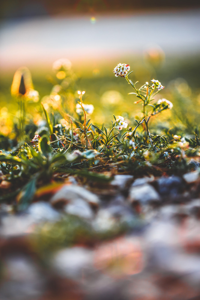 Flowers. Nature background in field in fresh morning