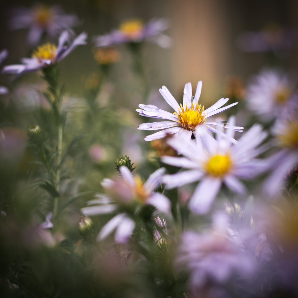 Flowers Nature Vintage Spring View Royalty Free Stock Image