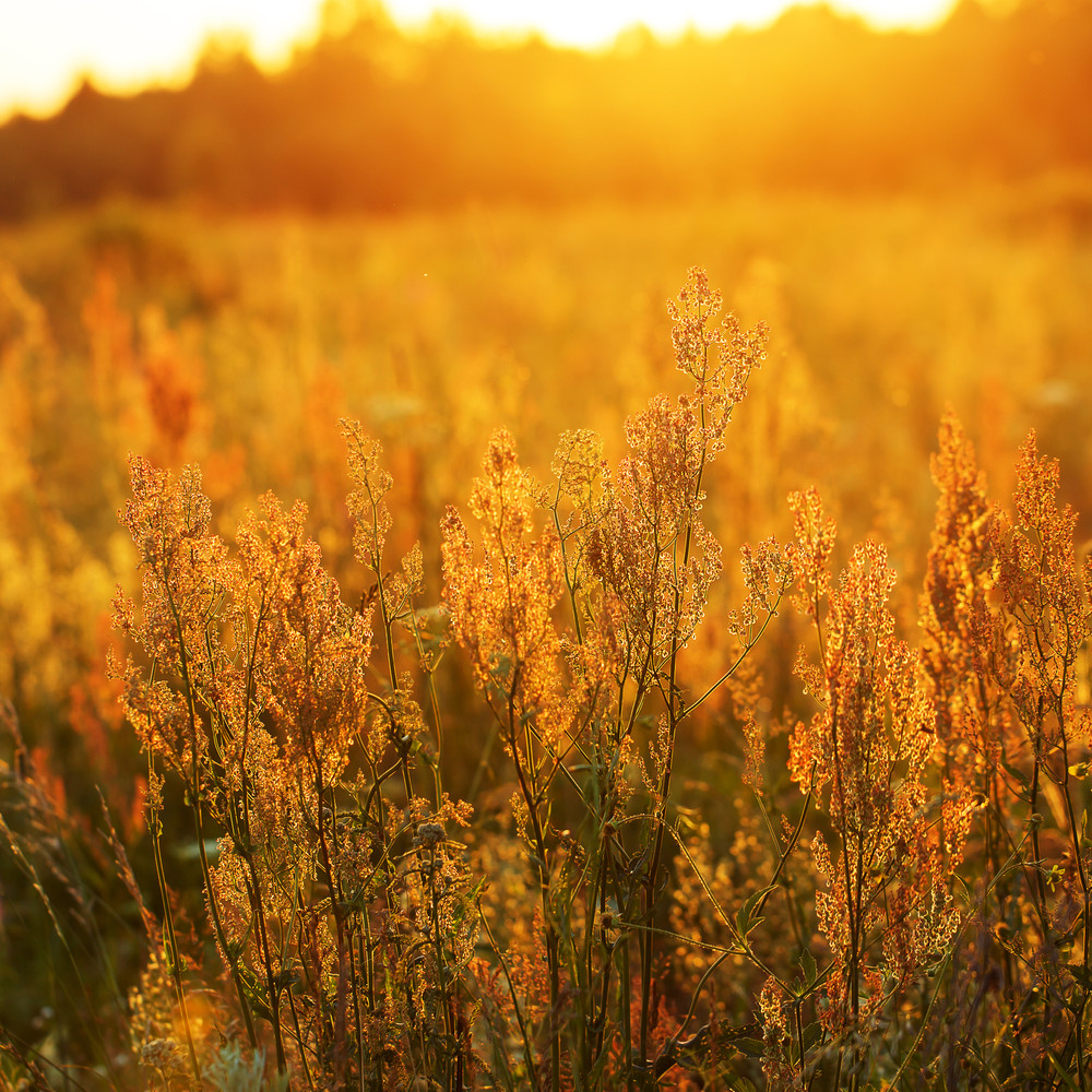 meadow summer flowers. Sunny vintage natural field background