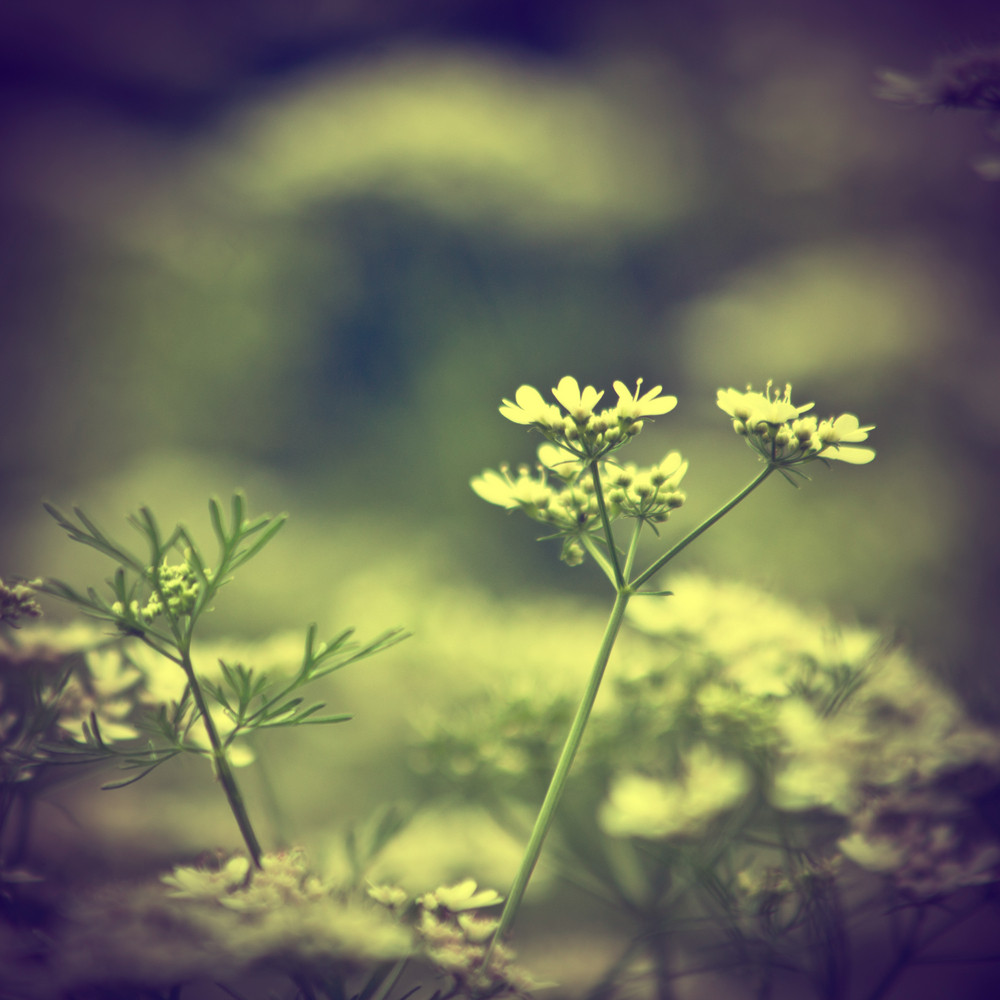Nature green plants and flowers. Outdor