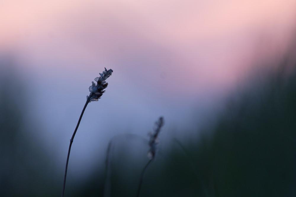Spring Dandelion field over sunset ture scene Stock