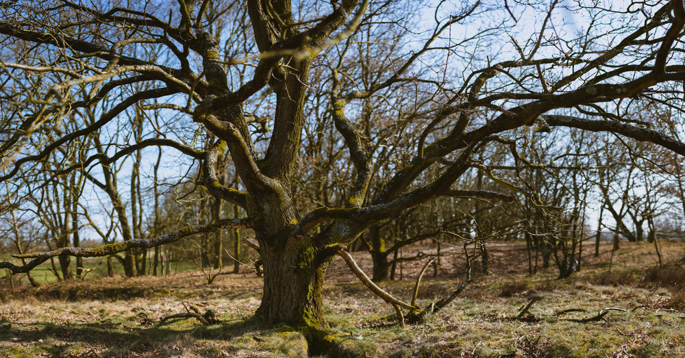 Panoramic shot of beautiful tree branches in spring tim landscape. Nature reserve Boberger Niederung in Hamburg, Germany