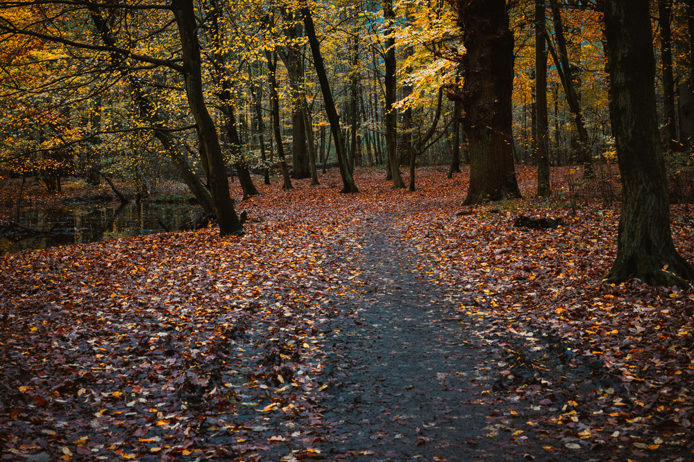 Pathway near pond between trees with last golden leaves in the beautiful autumn forest. Some leaves fallowing down to the ground
