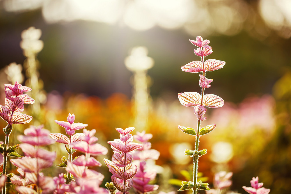 pink flowers on bright colorful nature background. Beautiful flowerbed in garden. Fresh calm autumn photo