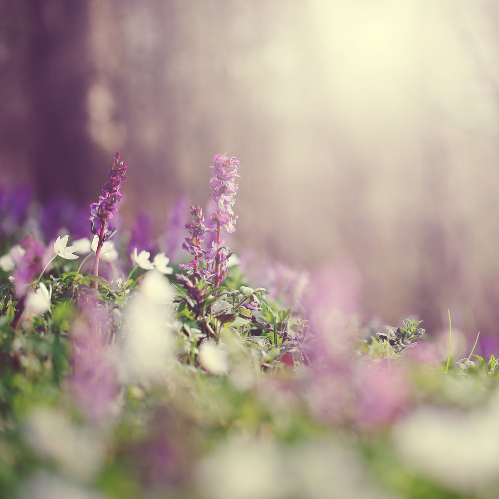 Soft Beautiful Flowers In Spring Royalty Free Stock Image Storyblocks