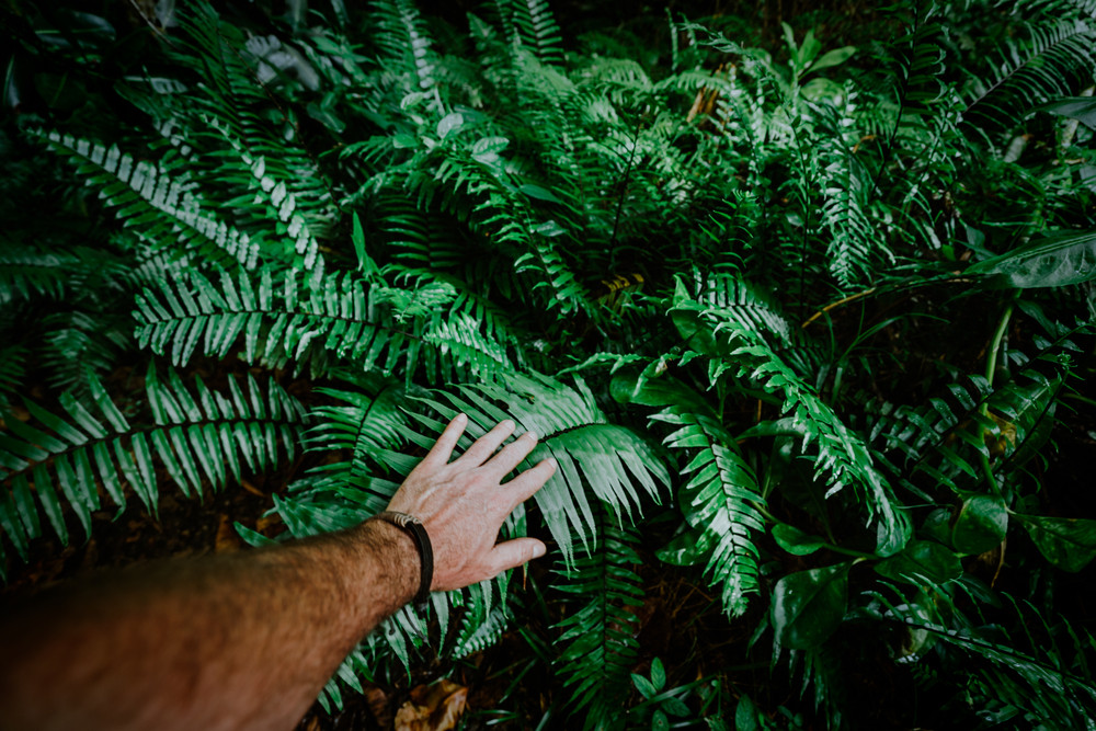 The man's hand touches green fern leaves. Adventure, discovery, exploring, ecology and environmental protection concept