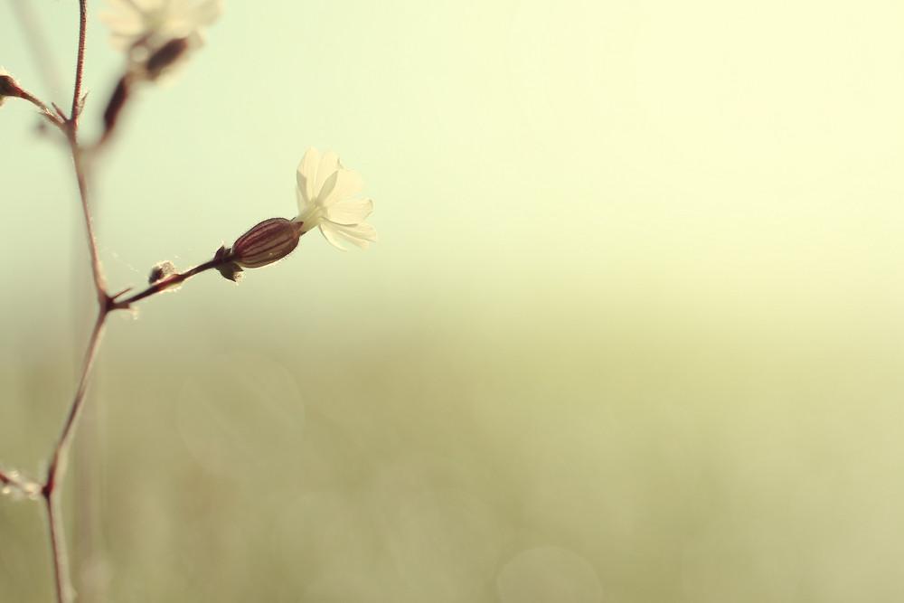 vintage flower at morning yellow sunrise background
