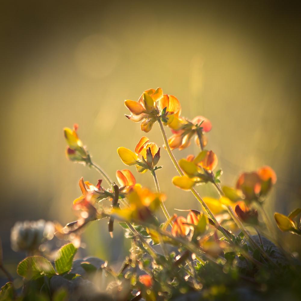 Vintage Flowers and Sunshine