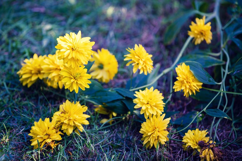 Vintage yellow flower background