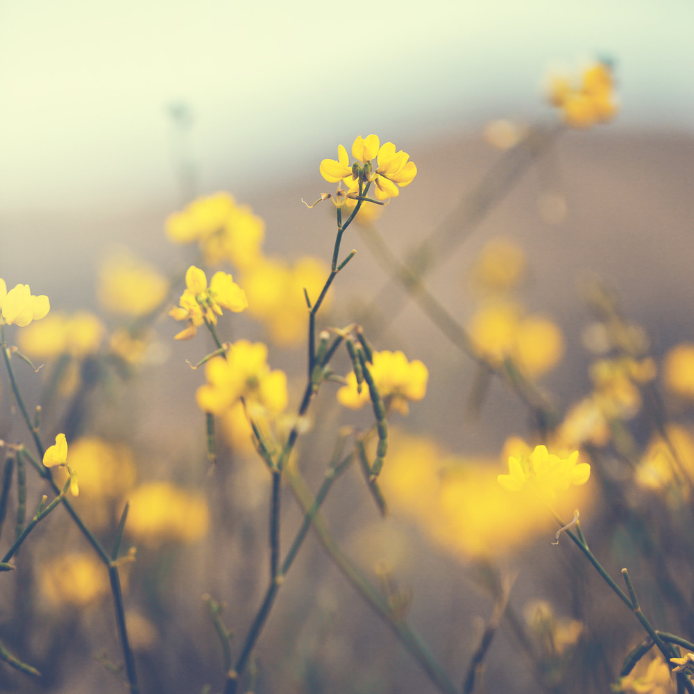 Vintage Yellow Flowers Nature Spring Background Royalty Free Stock
