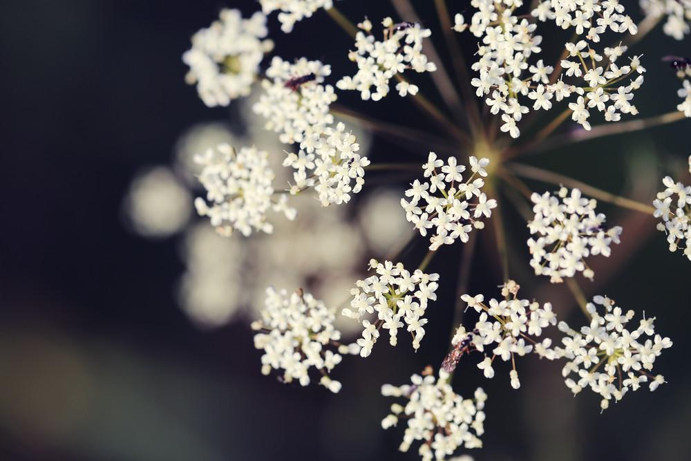 White beautiful vintage flowers background