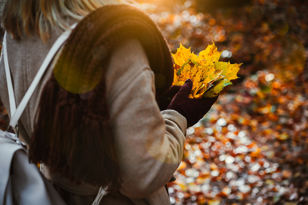 Women holding bouquet of yellow autumn maple leaves in her gloved hands. Ground covered with orange leaves lightend by warm evening backlit sun light