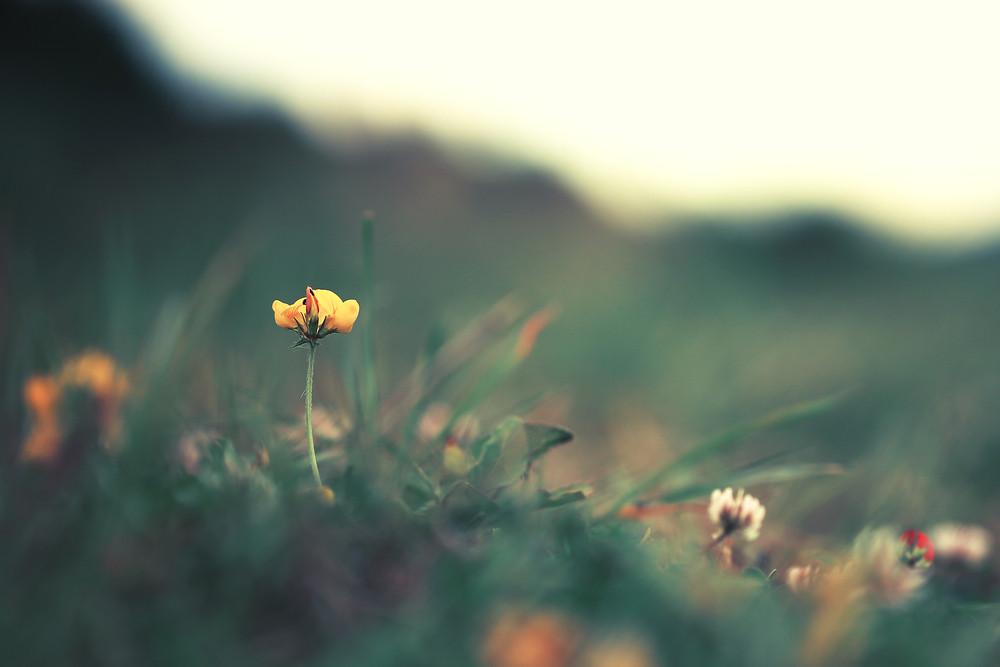 yellow flowers in dark green grass. Nature