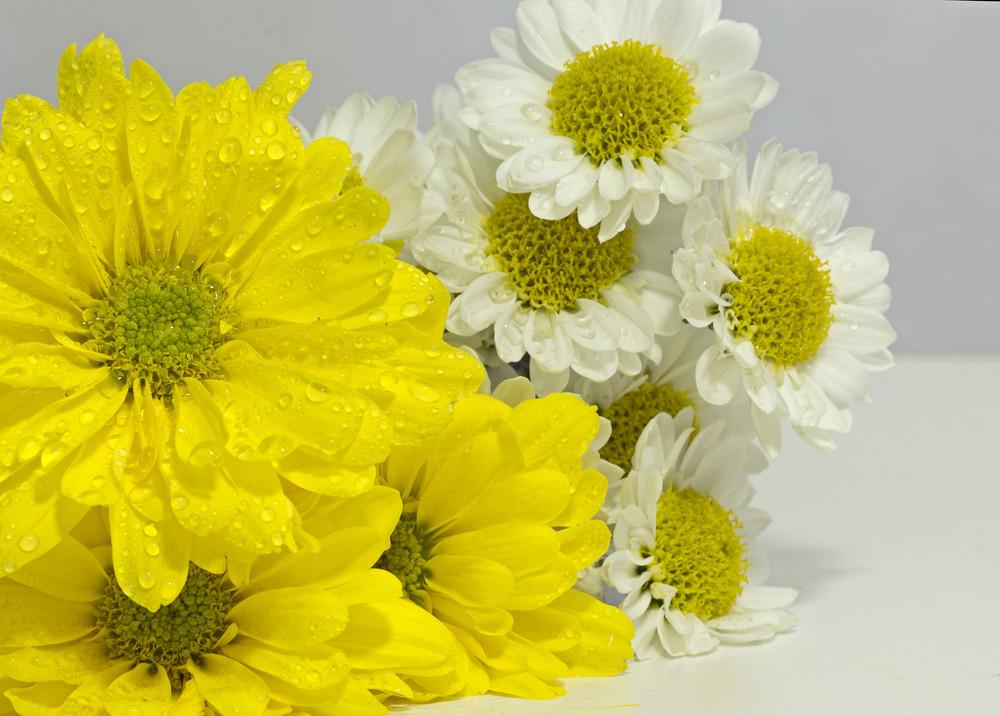Studio Fresh Flowers Background