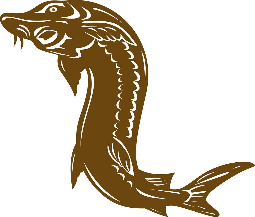 Sturgeon Fish Retro