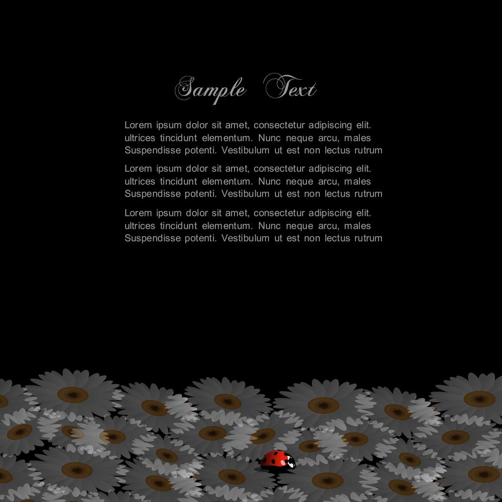 Stylish Black Background With Chamomile And Ladybird