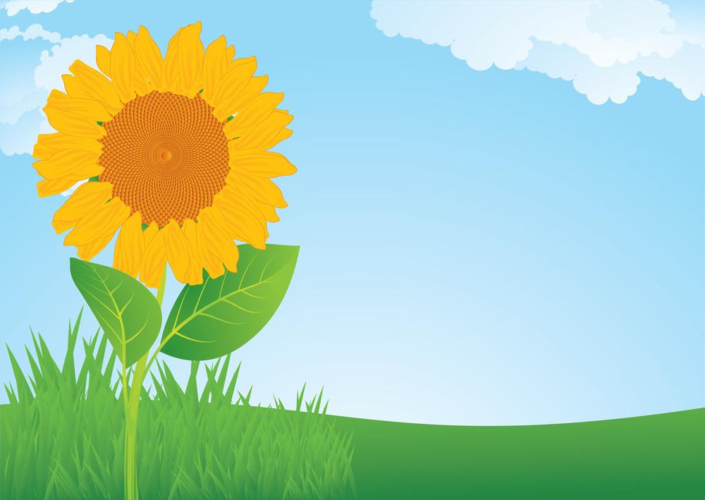 Sunflower. Vector Background