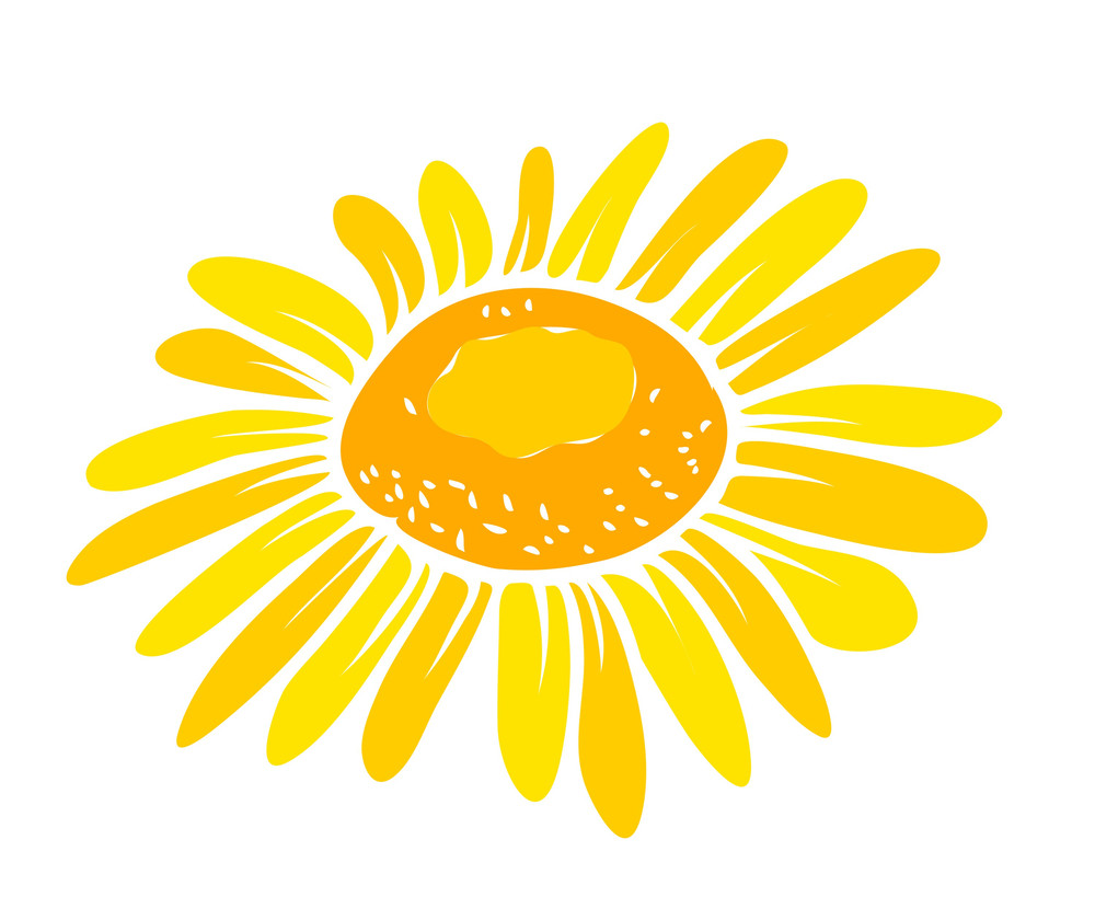 Sunflower Vector Closeuo