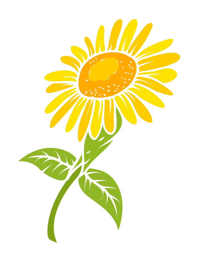 Sunflower Vector Design